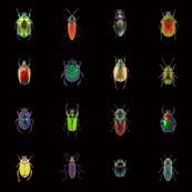 Beetleman...