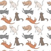 Cat observations
