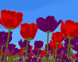 Spring-flowers-images_ed_ed_thumb
