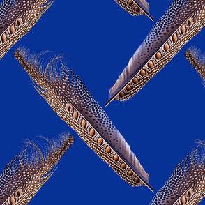 Argus Pheasant Tumult