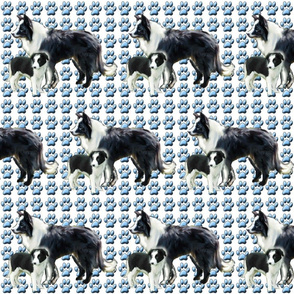border_collie_mother_and_pup_fabric