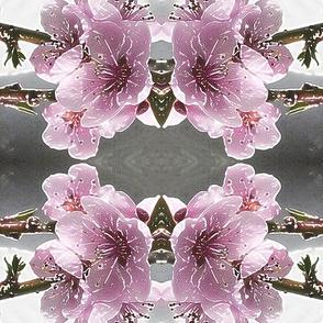 Pink Blossom 2