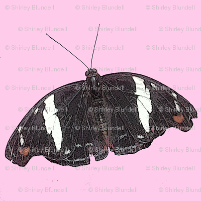Butterfly on pink background