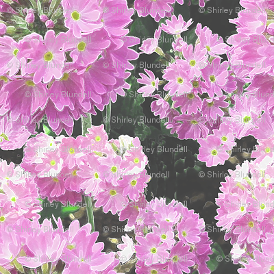 Flowers from Hatley__