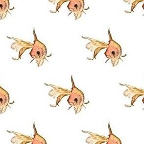 Harlequin Goldfish