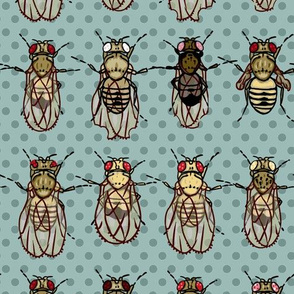 Giant drosophila mutants