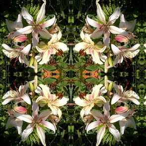 Lily_Cluster