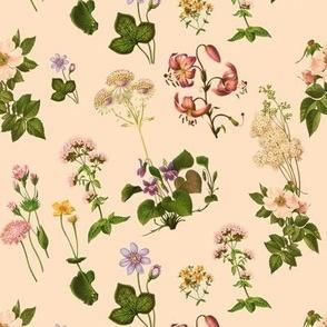 Cinderella's garden botanical print