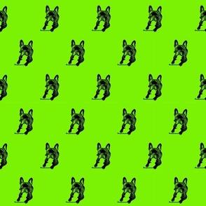 Bulldog Amy Bolzplatzrocker grün