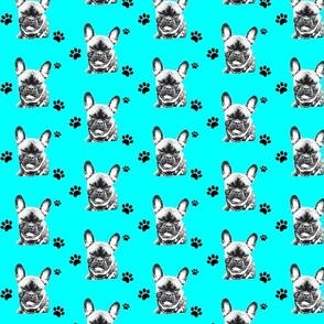 Bulldog Chicco Bolzplatzrocker türkis