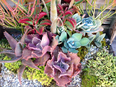 colourful succulent garden