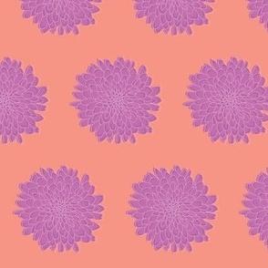 Mums Purple & Coral