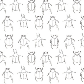 BeetleFabric2small