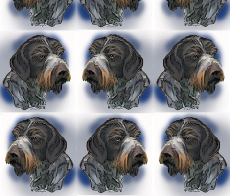 german_wirehaired_pointer_portrait