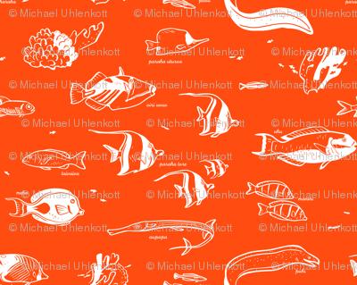 Tropical Fish 1b