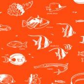 Rtropicalfish1b_shop_thumb