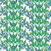 Berries_cover_large_shop_thumb