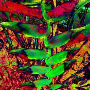 Heliconia Christmas