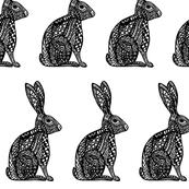 Zen Hares