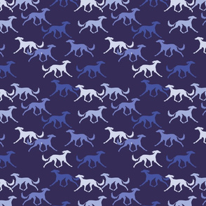 Salukis blue