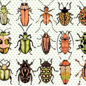 Beetles - orange green