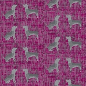 Beagles on magenta