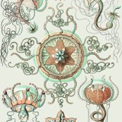 Rrhaeckel_trachomedusae_jellyfish_2_-_1904_shop_thumb