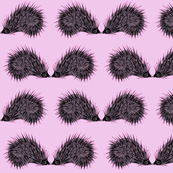 Prickly Pink