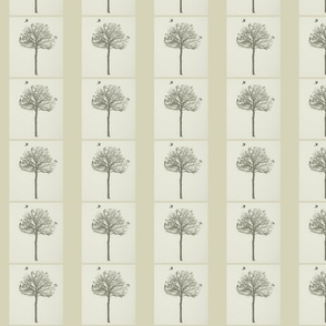 Fawn Trees