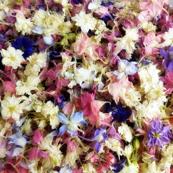 pastel larkspur confetti