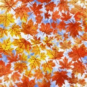 Rfalling_autumn_leaves__shop_thumb