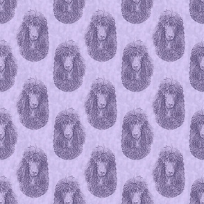 Irish Water Spaniel faces - purple