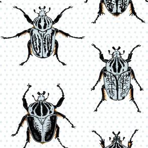 Large Goliath Beetles