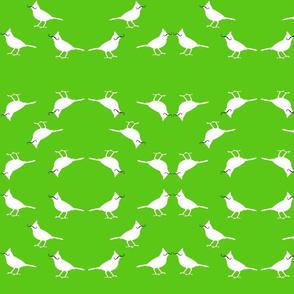 mustache_birds on green