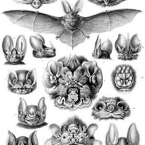 Ernst Haeckel Chiroptera Bats Fabric