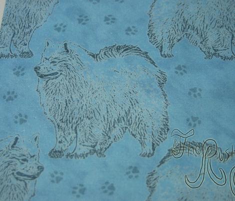 Posing American Eskimo dog - blue