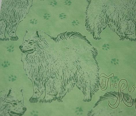 Posing American Eskimo dog - green