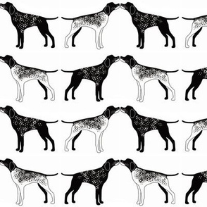Black and White Pointers