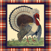 Turkey Lurkey ~ Square