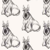 Jenny-Scottish Terrier