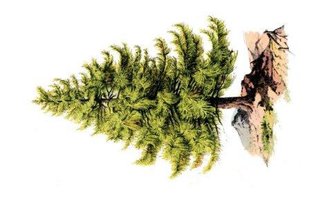 Rrrrrrtree_pine-graphicsfairy008b.pdf_shop_preview