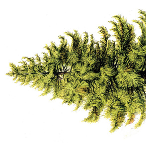 perfect pine 1yd tree wall hanging
