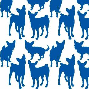 Chihuahuas-ch-ed-ed-ch