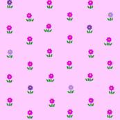 Peony Blossom 2013