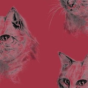 HAND DRAW CAT with black pencil on pomegranate pink