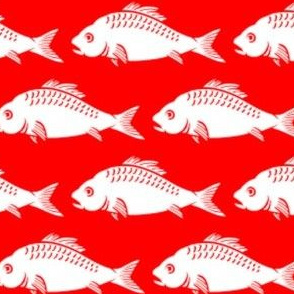 White Fish on Red