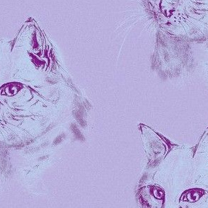 HAND DRAW CAT with black pencil on Mauve background