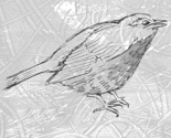 Single_bird_black_and_white_thumb
