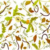 dandelion & centipedes