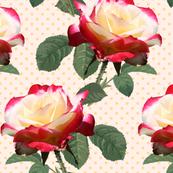 Rose - Double Delight Light